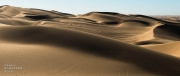 North Algodones Dunes Wilderness Area, California