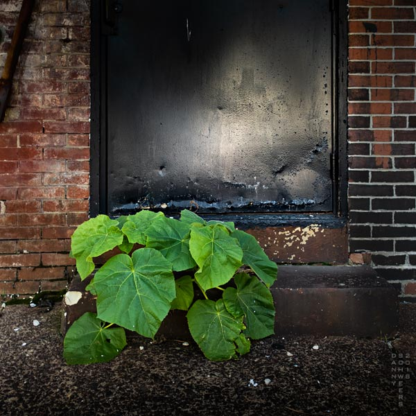 Plant growing on sidewalk, North Shipley Street, Wilmington, Delaware by Danny N. Schweers.