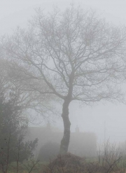 1_Fog_BackLane_Warslow_PeakDistrict_1804_2641_1080px
