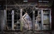 """""""Window Tree, Bancroft Mills"""" by Danny N. Schweers, 2016"""