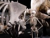 New Bedford Whaling Museum, Massachusetts