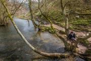 Dove Dale, Derbyshire, Peak District National Park, England