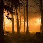 street lamps, fog, trees